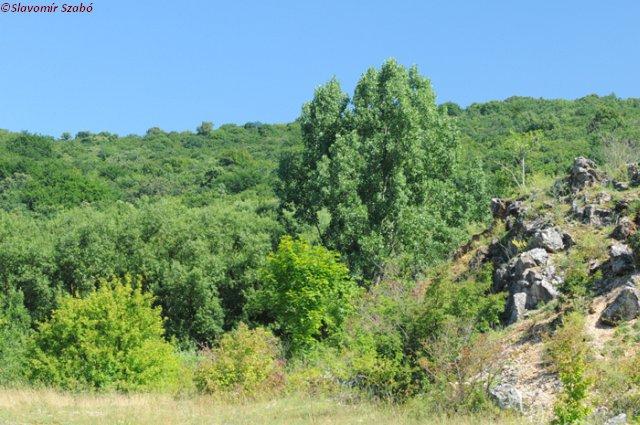 jasovska_planina_4_nahlad.jpg